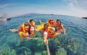 Lặn ngắm san hô tại biển Nhơn Lý