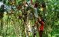 Vườn trái cây Mỹ Khánh