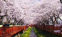 Du Lịch Hàn Quốc: Seoul – Everland – Đảo Nami 5 Ngày