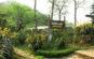 Vườn lan trên núi Hàm Rồng