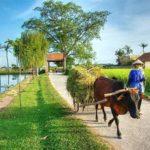 3 ngôi làng cổ, đẹp gần Hà Nội thích hợp đi chơi cuối tuần