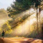 Nên đi du lịch Đà Lạt tháng mấy, mùa nào thì cảnh đẹp?